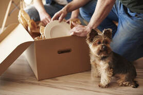 Picture of family and their Yorkie dog moving to their new home and unboxing plates, this photo was taken in Doral, Fl
